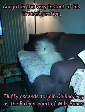 Ave Saint Fluffy!