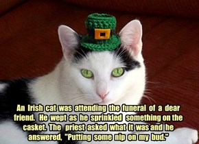"An  Irish  cat  was  attending  the  funeral  of  a  dear friend.   He  wept  as  he  sprinkled   something on the casket.  The   priest  asked  what  it  was and  he answered,  ""Putting  some  nip  on  my  bud."""