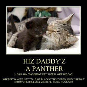 HIZ DADDY'Z  A PANTHER