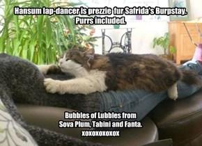 Happee Burpstay, Safrida!