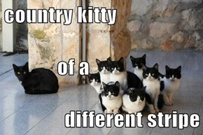 country kitty              of a different stripe