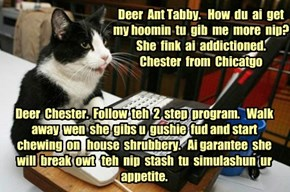 Deer  Ant Tabby.   How  du  ai  get  my hoomin  tu  gib  me  more  nip?  She  fink  ai  addictioned.   Chester  from  Chicatgo