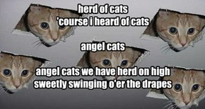 herd of cats 'course i heard of cats  angel cats  angel cats we have herd on high sweetly swinging o'er the drapes