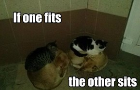If one fits