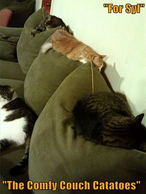 """For Syl""  ""The Comfy Couch Catatoes"""