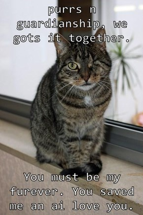 purrs n guardianship, we gots it together.  You must be my furever. You saved me an ai love you.