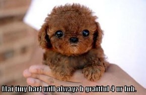 Mai tiny hart will alwayz b graitful 4 ur lub.