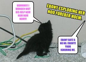 EBONY ESPLORING HER NOO FUREBER HOEM.