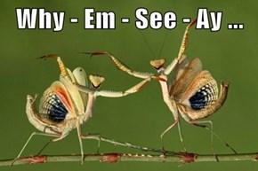 Why - Em - See - Ay ...