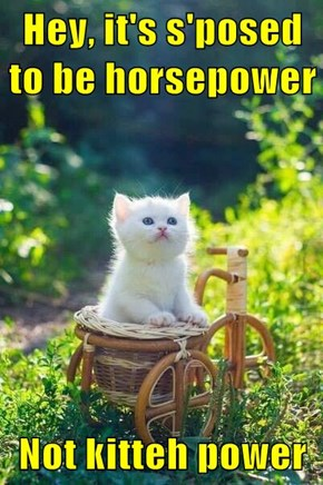 Hey, it's s'posed to be horsepower  Not kitteh power