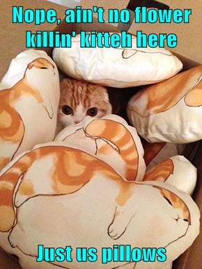 Nope, ain't no flower killin' kitteh here  Just us pillows