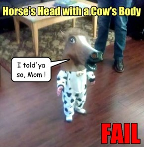 Mr. ED/Bossy da Cow?