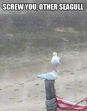Disregard Other Seagulls, Acquire Perch