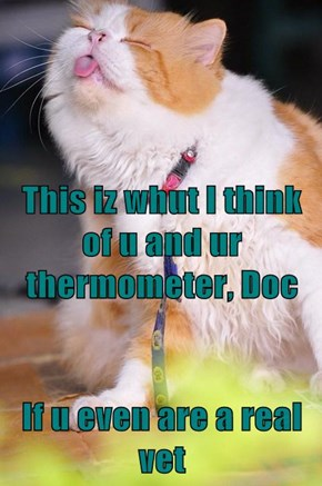 This iz whut I think of u and ur thermometer, Doc If u even are a real vet