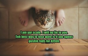 I am yur scale.  I will no lie to yoo.  Teh best way to lose wate is if yoo opens gushie fuds for kitteh.