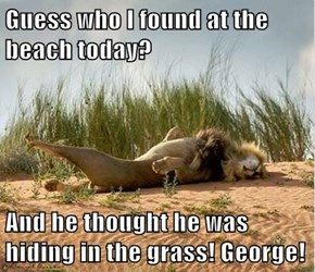 Guess who I found at the beach today?  And he thought he was hiding in the grass! George!