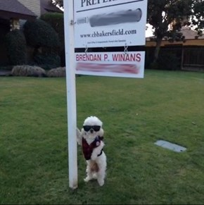 Best Realtor Ever