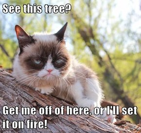See this tree?  Get me off of here, or I'll set it on fire!