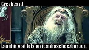 Greybeard  Laughing at lols on icanhascheezburger.