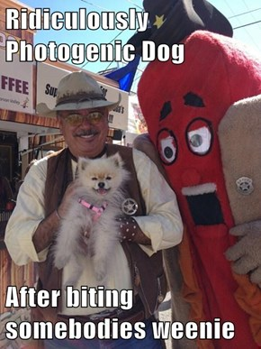 Ridiculously Photogenic Dog   After biting somebodies weenie