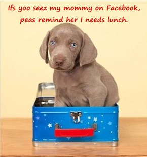 Ifs yoo seez my mommy on Facebook, peas remind her I needs lunch.