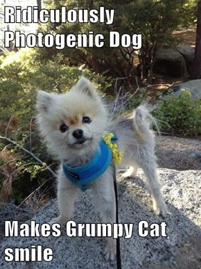 Ridiculously Photogenic Dog  Makes Grumpy Cat smile