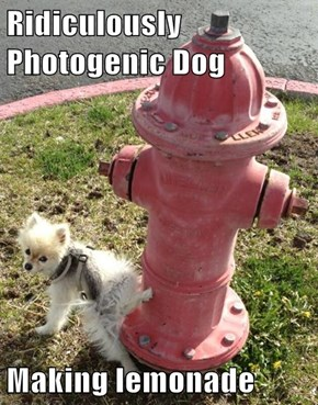 Ridiculously Photogenic Dog   Making lemonade