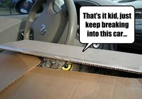 Grand Theft Owl