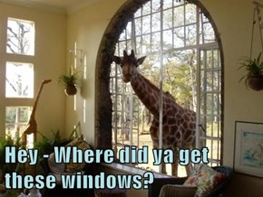 Hey - Where did ya get these windows?