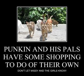 PUNKIN AND HIS PALS HAVE SOME SHOPPING TO DO OF THEIR OWN