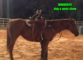 WINNER!!!! dog & pony show