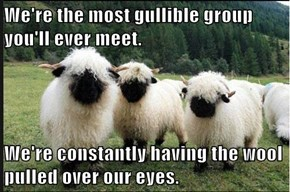Gullible Sheep