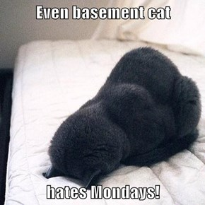 Even basement cat  hates Mondays!