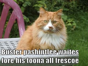 Buster pashintlee waites fore his toona all frescoe