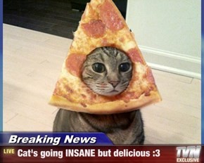 Breaking News - Cat's going INSANE but delicious :3