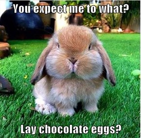 You expect me to what?  Lay chocolate eggs?