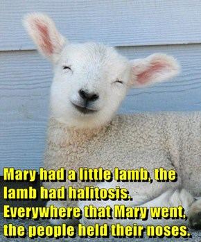 Mary had a little lamb, the lamb had halitosis. Everywhere that Mary went, the people held their noses.