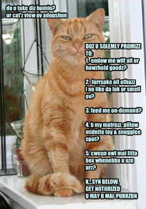 do u take diz humin? (ur cat'z view ov adopshun)