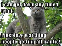 I can get down any time I want:  I just love watching people getting all frantic!