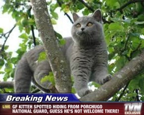 Breaking News - GF KITTEH SPOTTED HIDING FROM PORCHUGO NATIONAL GUARD, GUESS HE'S NOT WELCOME THERE!
