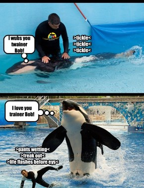 Who loves you, Baby Shamu?