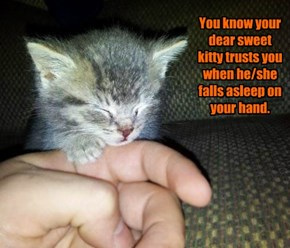 You know your dear sweet kitty trusts you when he/she falls asleep on your hand.