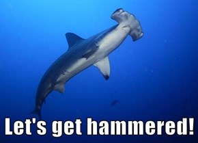 "Hammer Heads are Always ""That Guy"" at the Party"