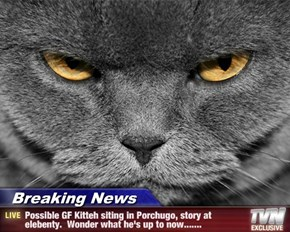 Breaking News - Possible GF Kitteh siting in Porchugo, story at elebenty.  Wonder what he's up to now.......