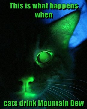 This is what happens when  cats drink Mountain Dew