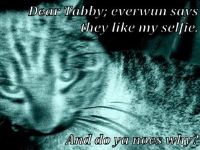 Dear Tabby; everwun says they like my selfie.  And do ya noes why?