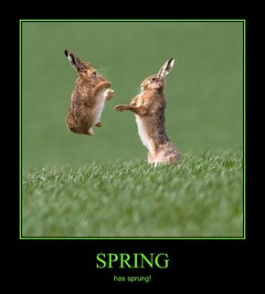 Bunnies are Springing for the Season!