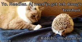 Yo. Needles. Ai need'ja get teh dawg's 'tenshun.      Kitteh's  hedgeman