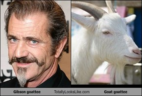 Gibson goattee Totally Looks Like Goat goattee