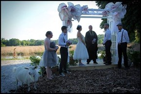 Nothing Says Love, Like A Goat Wedding!